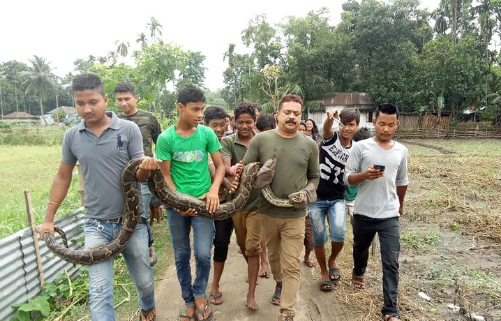 Sanjay Dutta zieht sich mit dem Python und seinen Helfern zurück