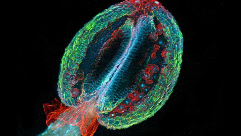 Small World: Knipsen durchs Mikroskop