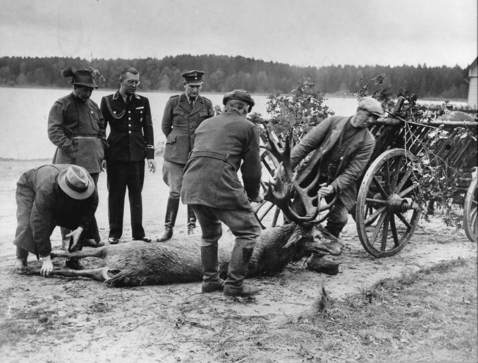Gömbös in D - Göring u. Gömbös von Jakfa bei der Jagd in Ostpreussen, Rominter Heide