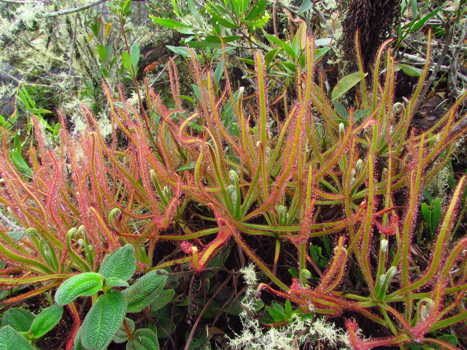 EINMALIGE VERWENDUNG Neue Pflanze auf Facebook entdeckt