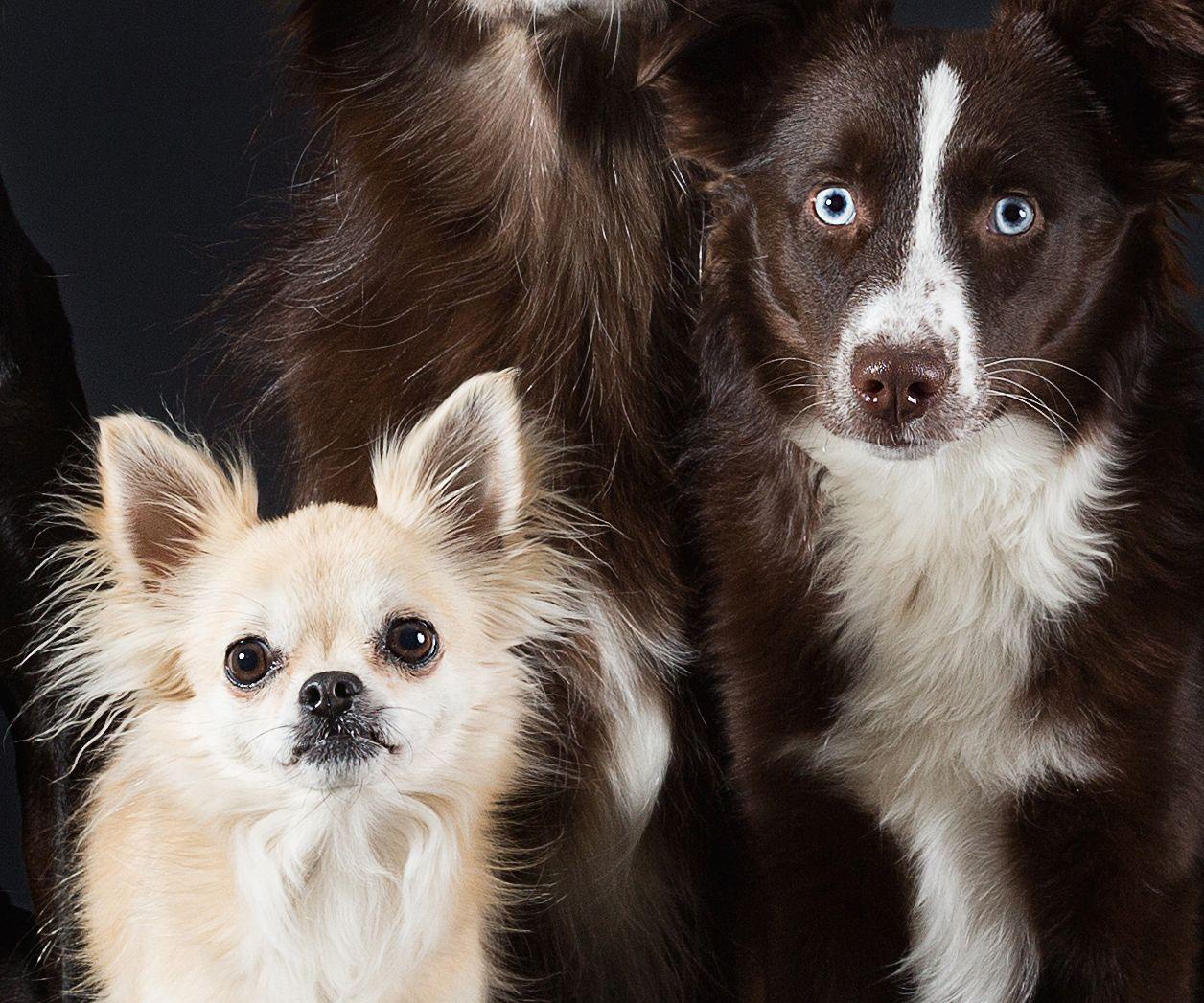 EINMALIGE VERWENDUNG Fokussiert/ Tierfotografie/ Alle mal herschauen