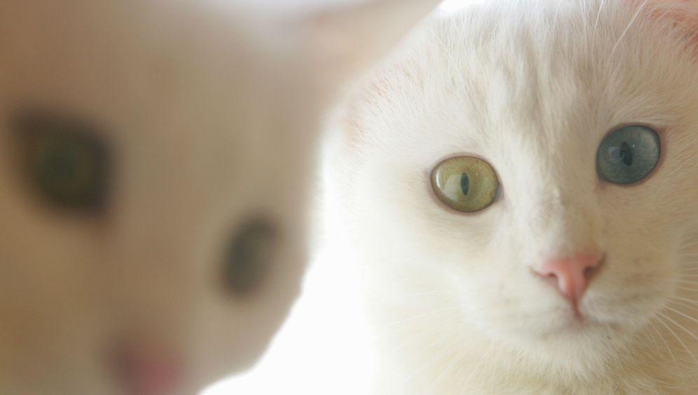 Demente Hunde und Katzen: Was können Tierhalter tun?