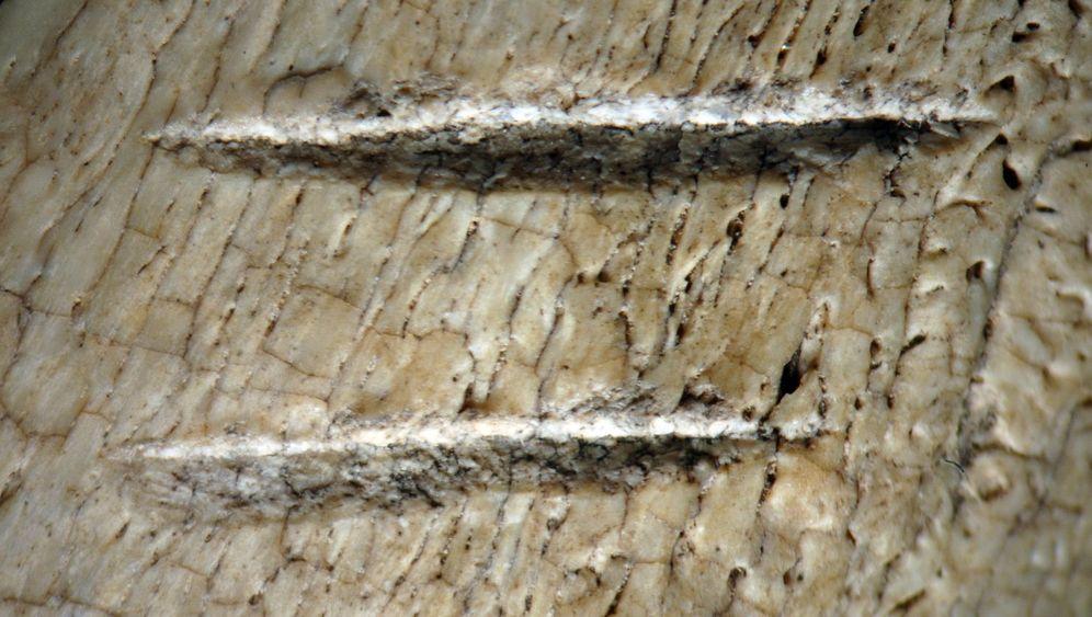 Verräterische Funde: Kratzer im Knochen