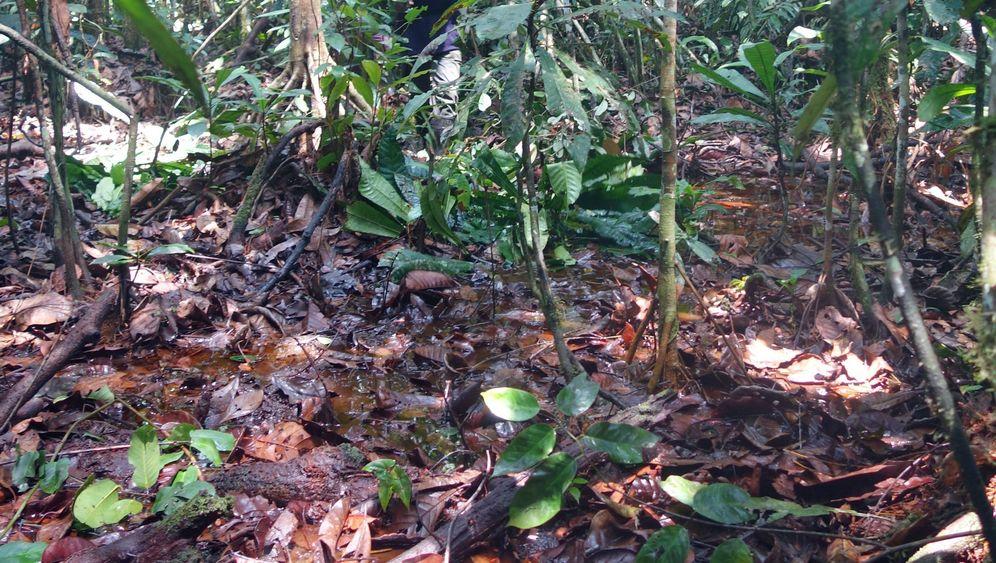 Kohlenstoff-Depot: Riesiges Torfmoor im Kongobecken entdeckt