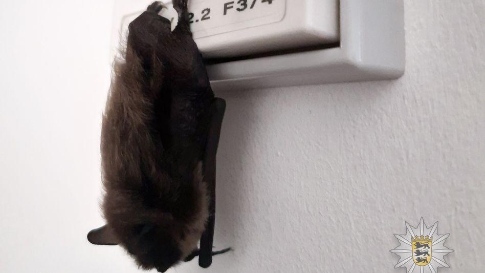 """""""Neuer Kollege Batman?"""": In Ludwigsburg hat sich eine Fledermaus in ein Polizeibüro verirrt"""