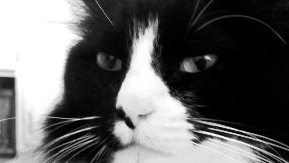 Katze (Symbolbild): Japanische Ermittler wollen einen Verdächtigen per Katzenvideo überführt haben
