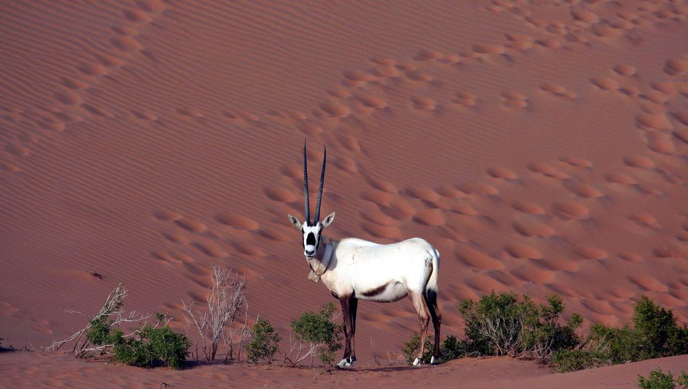 Rote Liste 2011: Diese Tiere sind bedroht