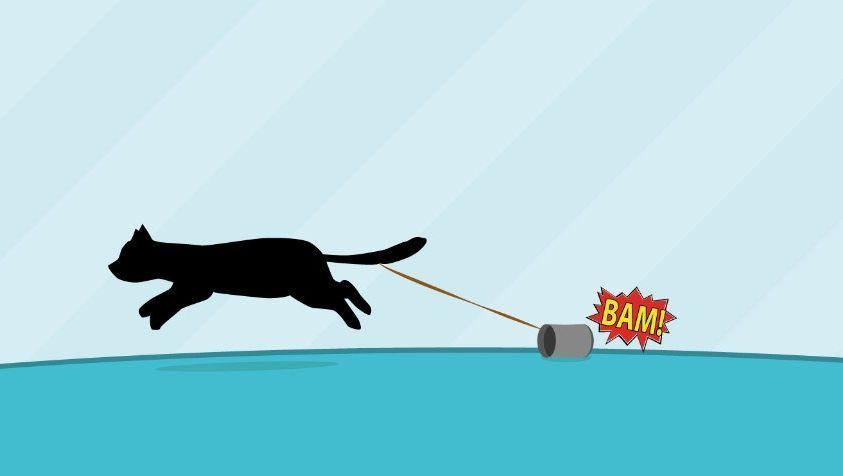 Magisch: Katze verdoppelt Geschwindigkeit bei jedem Dosenscheppern