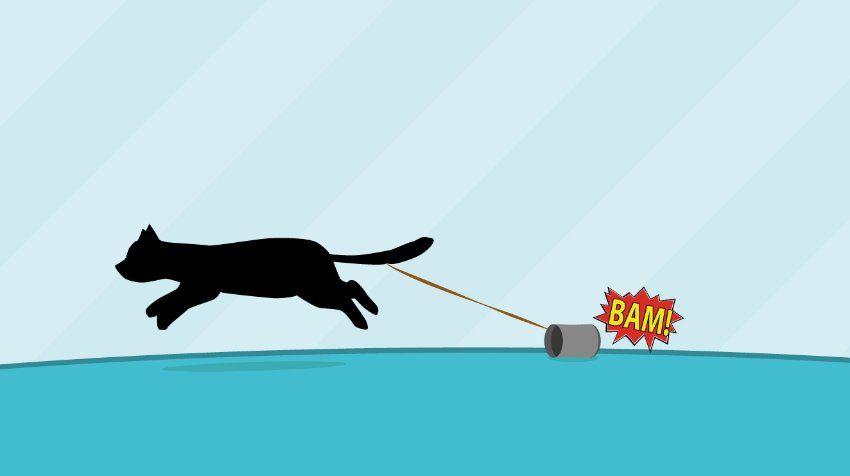 Rätsel der Woche Rennende Katze