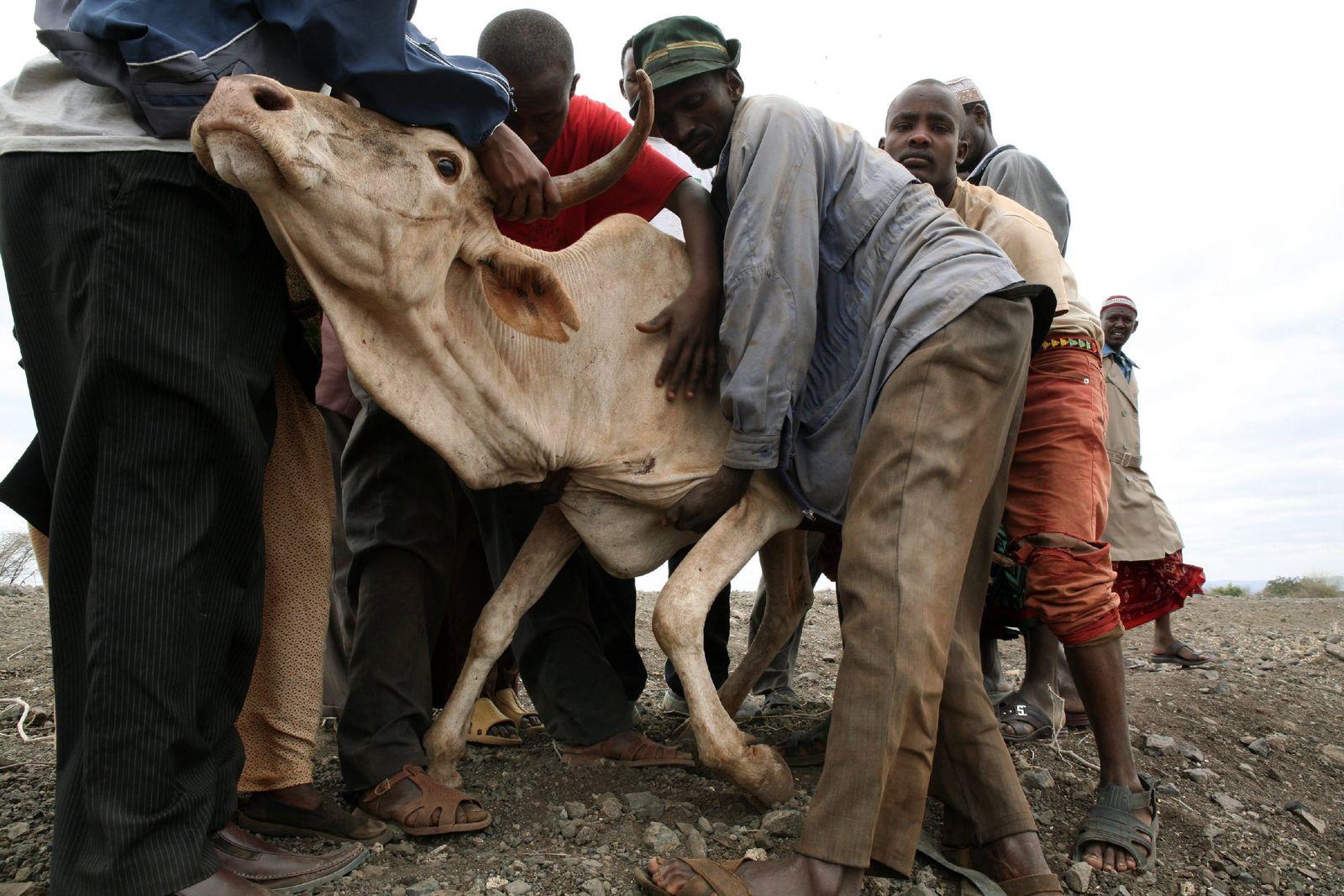 Anhaltende Dürre in Kenia