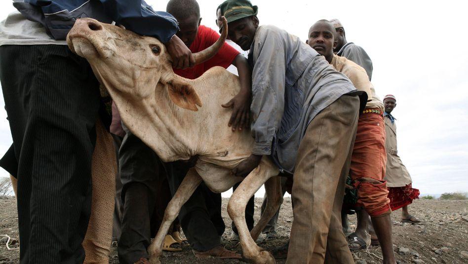 Dürre in Kenia: Schwierige Gespräche zum Kyoto-Abkommen
