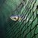 Die Tragödie der Ozeane