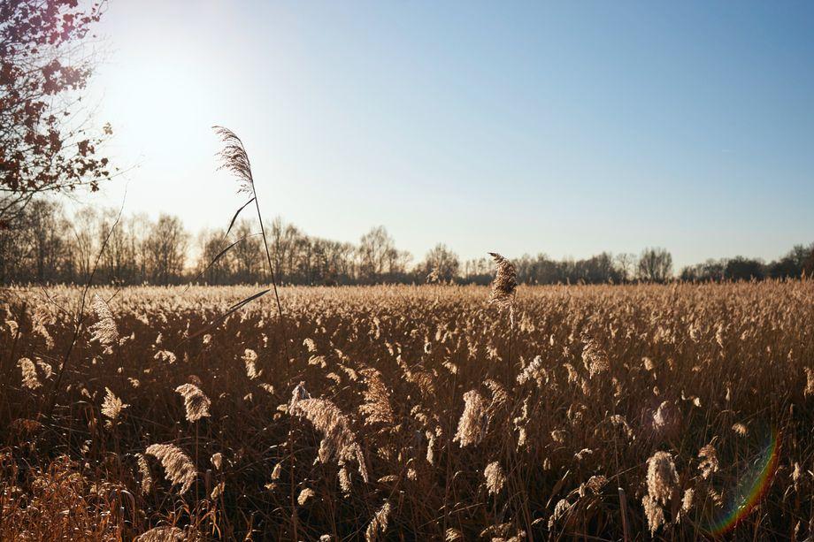 Eine der Wiesen, an denen Krüger und Krischer vorbeispaziert sind: So oder so ähnlich kann man sich eine Ausgleichsfläche für ein Windrad vorstellen. Natürlich würden hier, abhängig von den Vogelarten, die es zu schützen gilt, immer etwas andere Pflanzen wachsen.