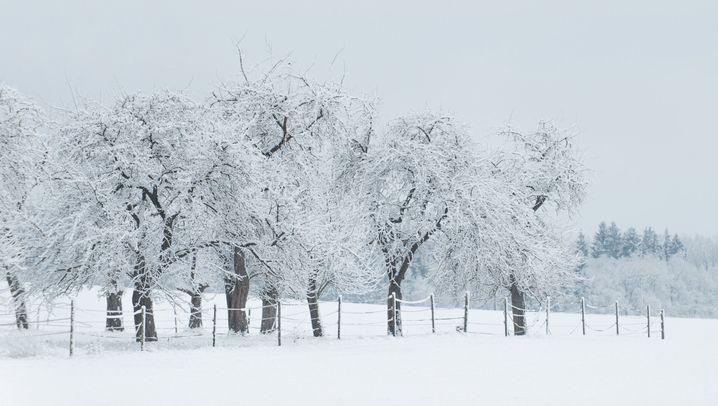 Wintereinbruch in Deutschland: Es schneit!