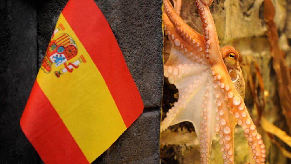 Photo Gallery: Paul Picks Spain