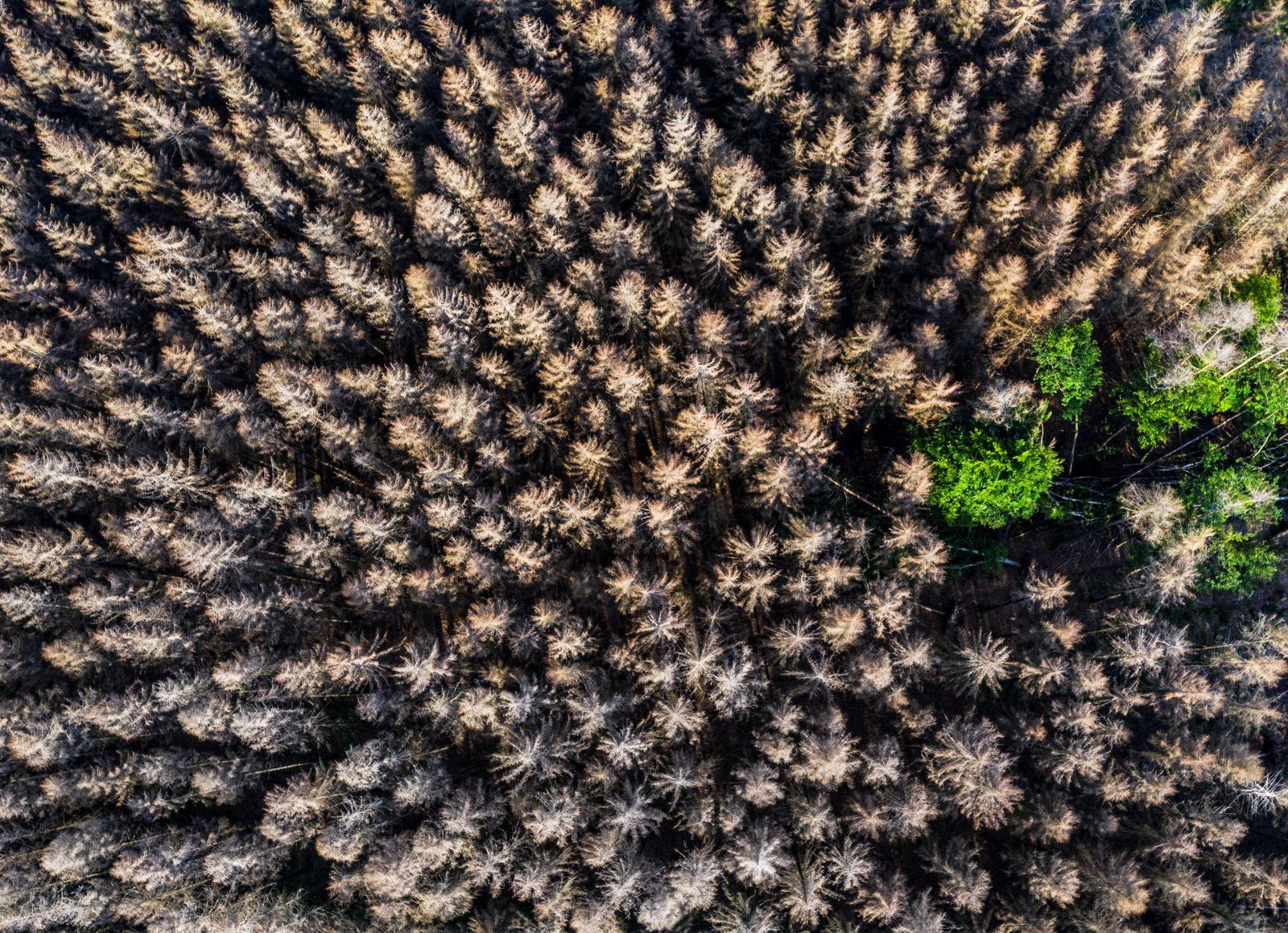 Waldsterben im Naturpark Arnsberger Wald, ¸ber 70 Prozent der Fichten B‰ume sind tot oder erkrankt, besch‰digt, meist du