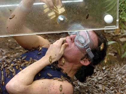 German singer Daniel Kueblboeck bathes in a bathtub full of cockroaches.