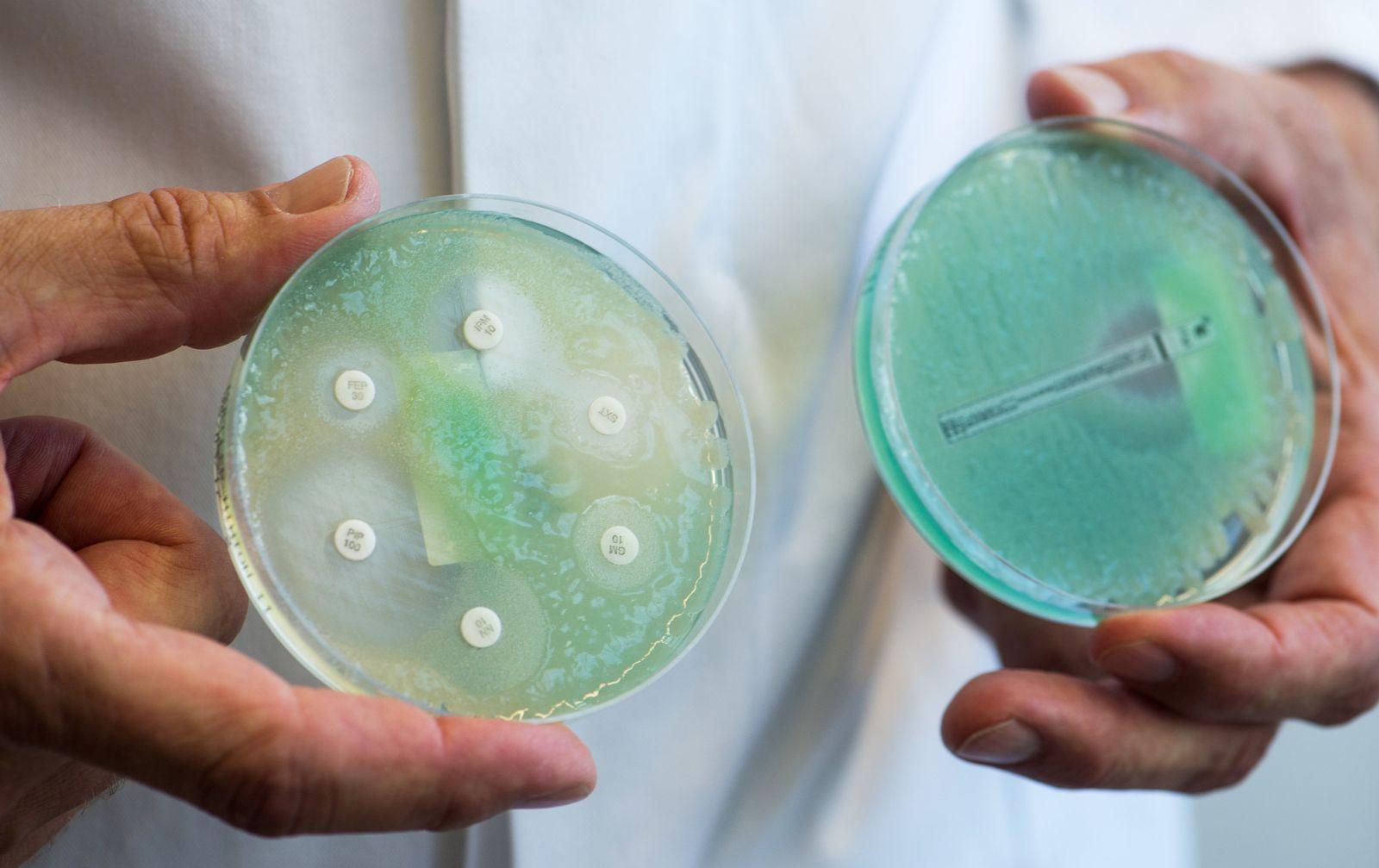 Bakterien Antibiotika