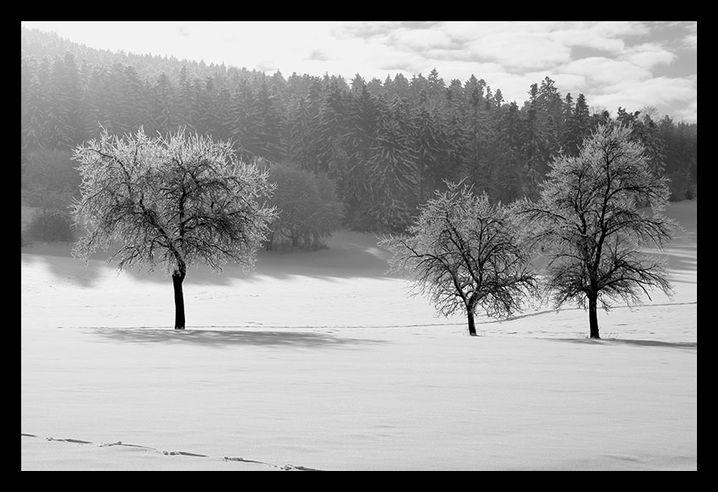 Winterlandschaft: Der Schnee erscheint gräulich, die Baumstämme haben keine Zeichnung