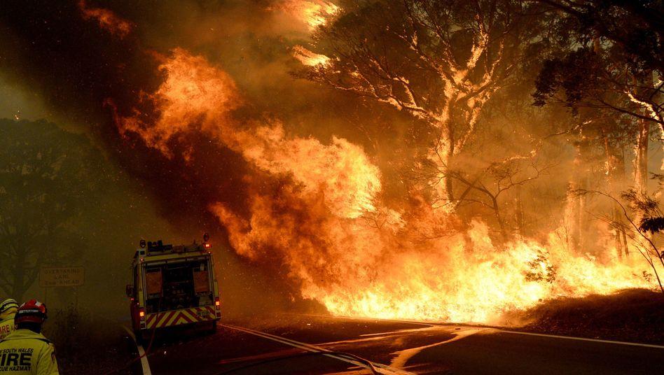 """Das """"Grose Valley Fire"""" in den Blue Mountains nahe Sydney"""