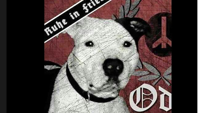 Screenshot: Profilbild der gefakten Solidaritätsseite für Kampfhund Odin