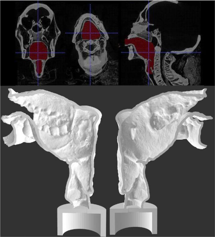 Rekonstruktion des Sprechapparats im 3D-Drucker: Zungenmuskulatur und Gaumen blieben über die 3000 Jahre nicht erhalten