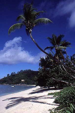 Der Strand vor dem Plantation Club ist fast drei Kilometer lang