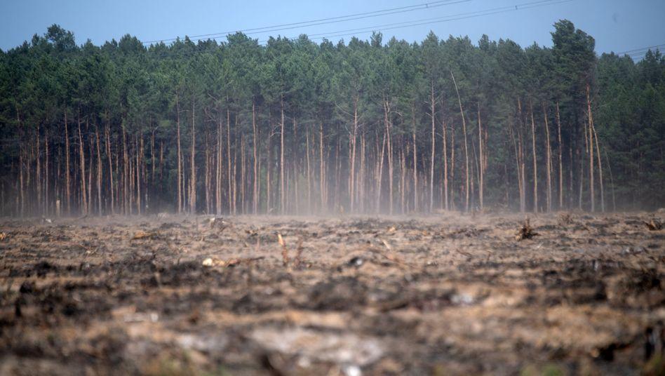 Fichtenwalde in Brandenburg: Deutschlands Böden sind staubtrocken.