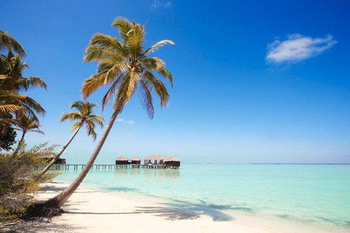 Palmentraum im Indischen Ozean: Chillen nur auf der gebuchten Resortinsel