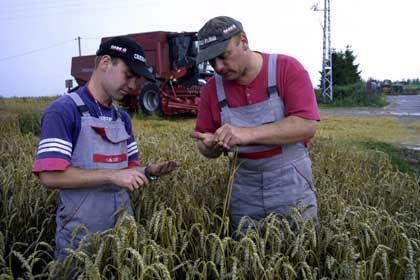 Bio-Ethanol: Der Benzin-Ersatz kann zum Beispiel aus Getreide gewonnen werden.