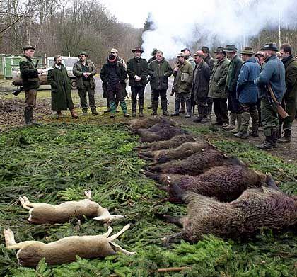 """Jäger, erlegte Wildschweine: """"Jagende Zahnärzte und Rechtsanwälte"""""""