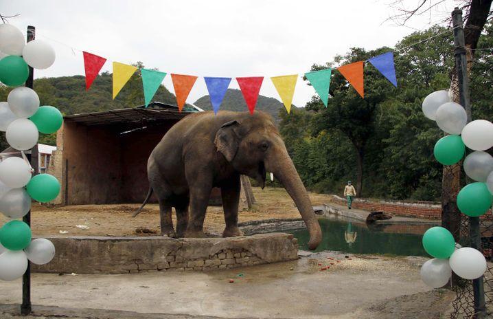 Zoo in Pakistan: Abschiedsfeier für Kaavan