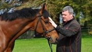 Irischer Reittrainer entschuldigt sich für Foto mit totem Pferd