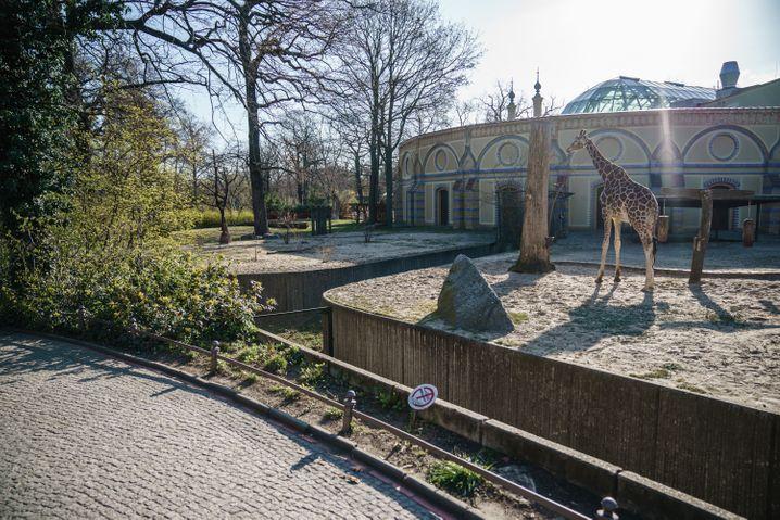 Zoo Berlin Anfang April: Die Besucher dürfen nicht kommen