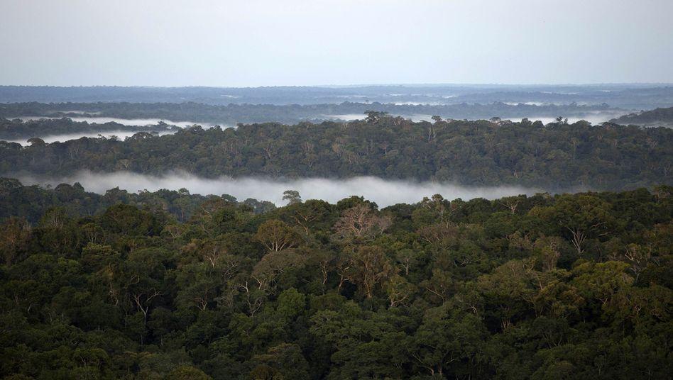 Amazonas-Wald (Archivbild): Biomasse speichert weniger CO2