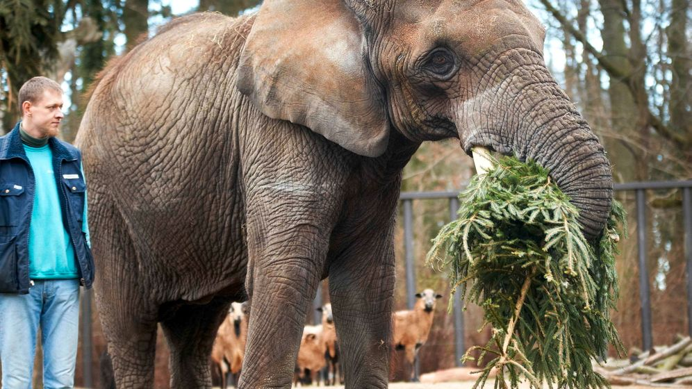 Photo Gallery: A Festive Feast for the Animals