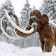 """Mammut (Symbolbild): """"Für die Menschen der Eiszeit war das Mammut das, was die Kuh für uns heute ist"""""""