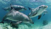 Delfine kennen sich beim Namen