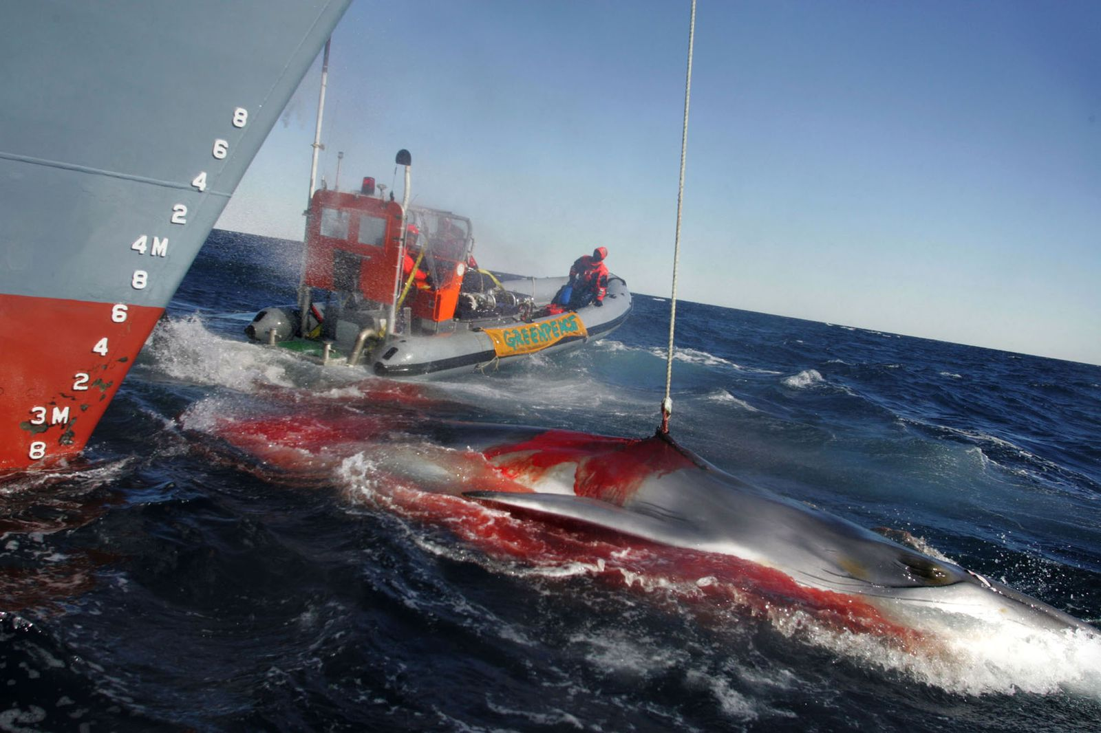 EINMALIGE VERWENDUNG SOUTHERN OCEAN GREENPEACE PROTEST