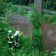 Vermisster nach Sturzflut in Sachsen – Katastrophenfall in Hof