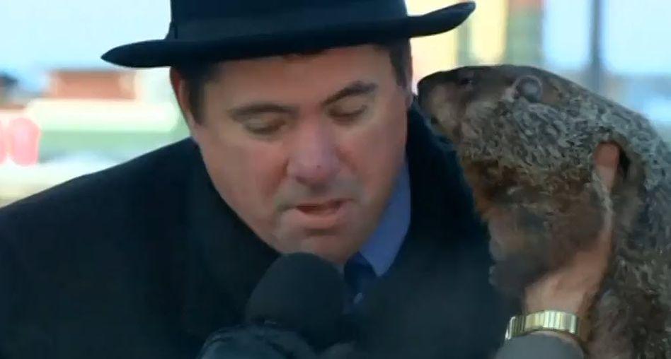 Tier macht Sachen: Übellauniges Murmeltier beißt Bürgermeister ins Ohr