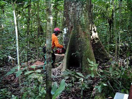 Holzfäller: 25 Prozent mehr Kohlendioxid