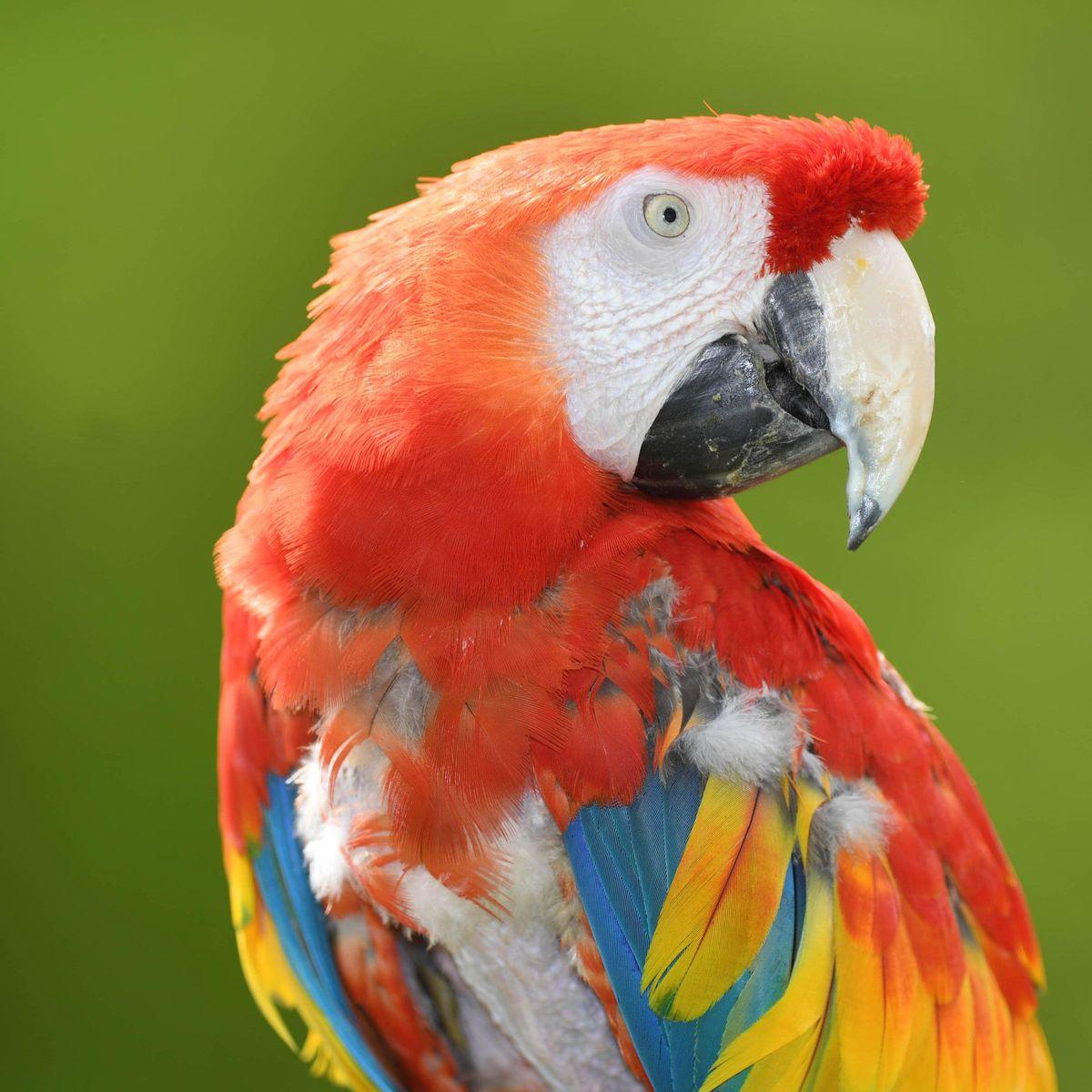 ich habe papagei