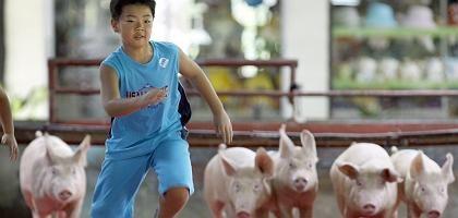 Mensch und Tier: Das H1N1-Virus zirkulierte nach Schätzung der Forscher zwischen neun und 17 Jahren in Schweinen