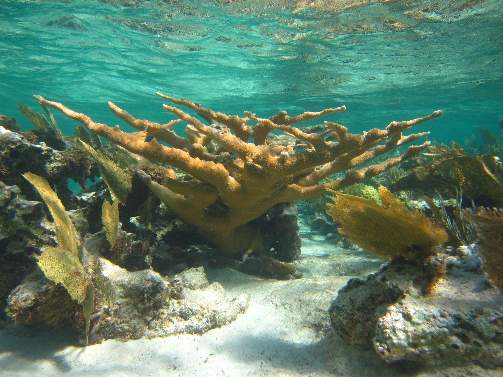 EINMALIGE VERWENDUNG Korallenriffe / Umwelt / WISSENSCHAFT
