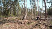 Hohe Waldbrandgefahr - diesmal schon im Frühjahr