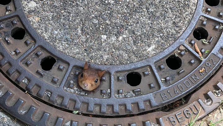 Tiere stecken fest: In der Klemme