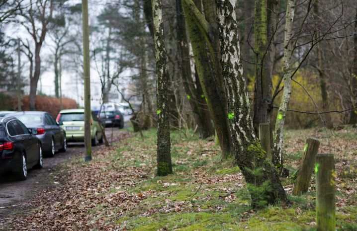 Markierte Bäume am Björnsonweg
