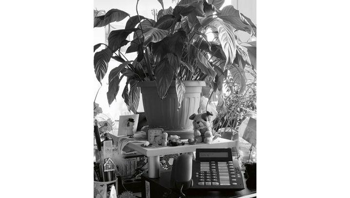 Grünzeug im Büro: Meine kleine, vertrocknete Pflanze