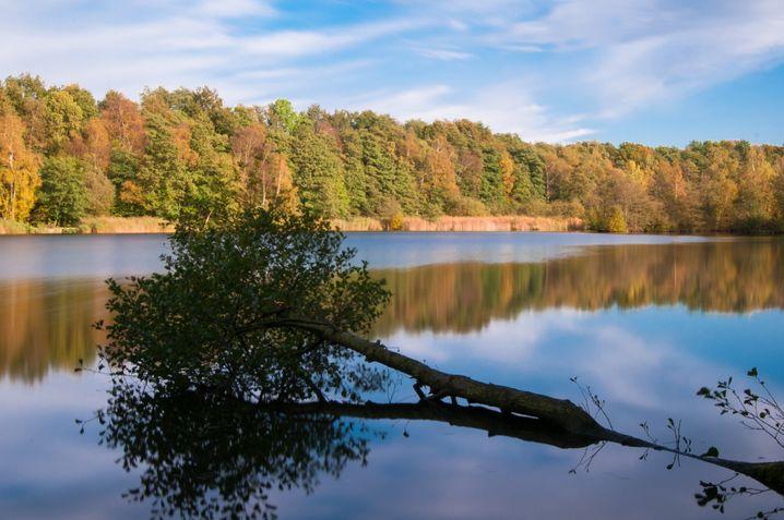 Bredenbeker Teich: Fernsicht und Baumhöhlengefühl gleichermaßen